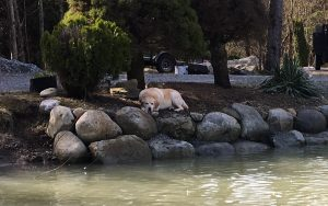 pond and rock wall with dog
