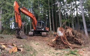 tree fall clean up