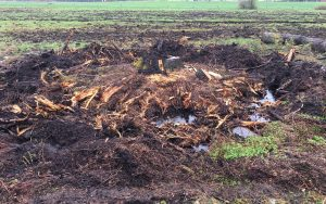 land clearing of trees
