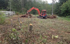 tree removal for site prep